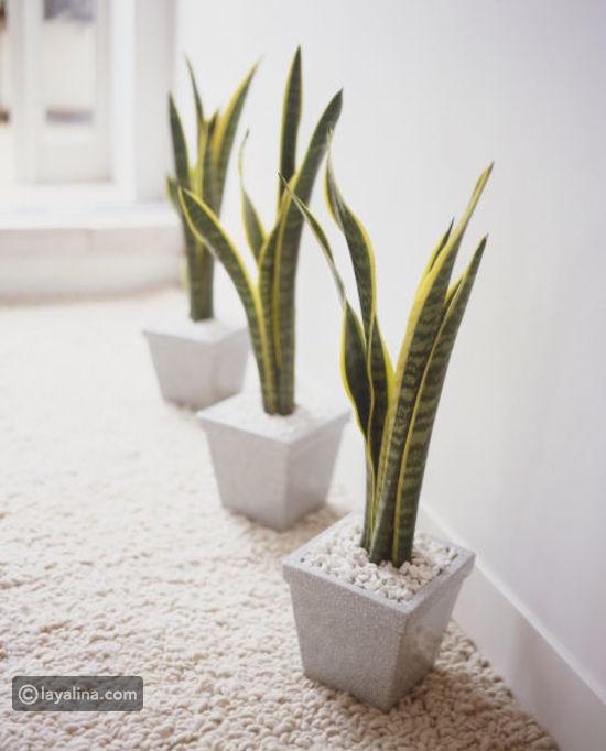 نباتات الزينة بالصور (أولا نباتات الظل 0a045e5b981bf014195a