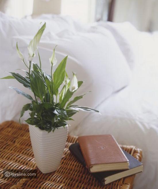 نباتات الزينة بالصور (أولا نباتات الظل 10730f660e78fd4606aa