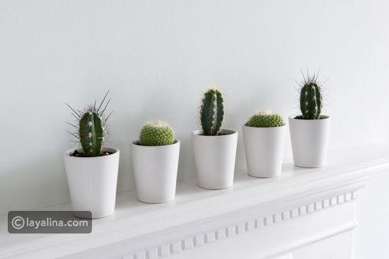 نباتات الزينة بالصور (أولا نباتات الظل 7e04d16ff07945ba837c