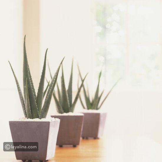 نباتات الزينة بالصور (أولا نباتات الظل e3786b4528b66125e122