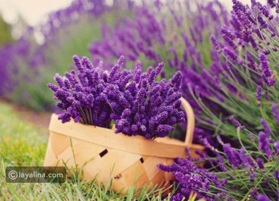 نباتات الزينة بالصور (أولا نباتات الظل f7f235b041eeb6bbe91a
